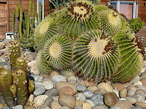 Giant Cactus Stock Photo - Image: 4067460