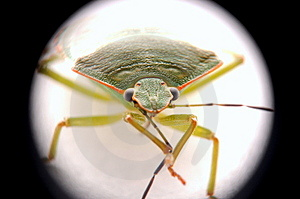 Bug Royalty Free Stock Photography - Image: 4073307