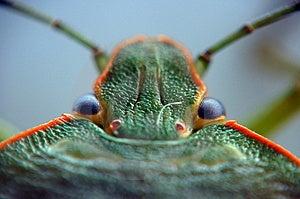Bug Stock Photography - Image: 4073322