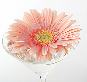 Studio Shot Of Flower Stock Photos - Image: 4081463