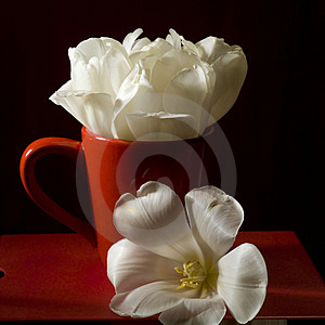 Studio Shot Of Flower Royalty Free Stock Photo - Image: 4081475