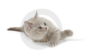 Kitty look up Royalty Free Stock Photography