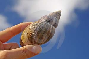 Large Snail In Woman's Hand Stock Photo - Image: 4081760