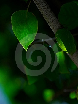 Green Leave Stock Image - Image: 4082381