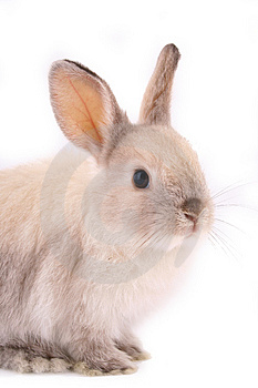A rabbit Stock Photos