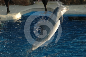 Leaping Stock Image - Image: 412781