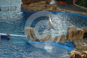 Leap Stock Photography - Image: 412782