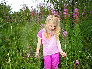 Walking In The Fireweeds Royalty Free Stock Photos - Image: 418018