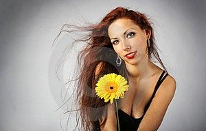 Yellow Stock Image - Image: 4112661