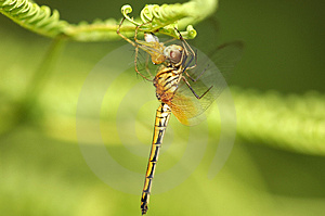 Hanging Predator With Prey Stock Photography - Image: 4114022