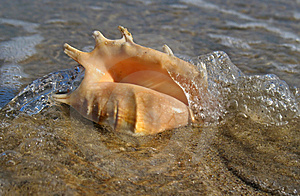 Shell On The Beach Royalty Free Stock Photography - Image: 4116507
