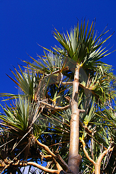 Strong Tropical Palm Tree Against Sky Background Stock Photo - Image: 4118870