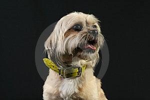 Dog Isolated On Black Royalty Free Stock Photo - Image: 4121975