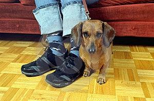 Doggy Style Stock Image - Image: 4124571