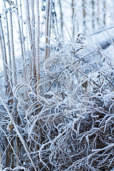 Frozen Grass Royalty Free Stock Photo - Image: 4135285