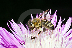 Bee Stock Images - Image: 4142374