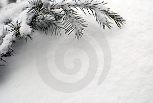 Snow covered branch Stock Images
