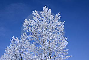 Frozen Trees Stock Image - Image: 4147761