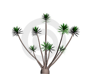 Yucca Tree I Royalty Free Stock Photos - Image: 4158328