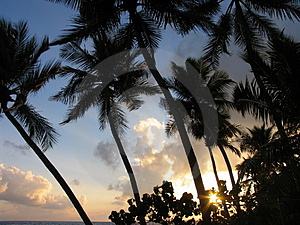 Sun Raise And Cocos Tree Stock Photos - Image: 4170833