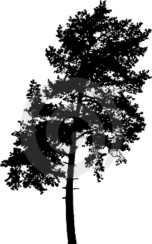 Isolated Tree - 7. Silhouette Stock Images - Image: 4185154