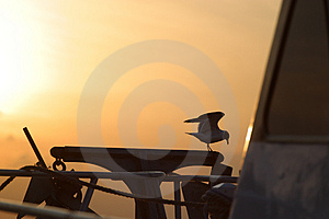 Seagull Departing  A Boat At Sunset . Silloette Stock Photos - Image: 421433