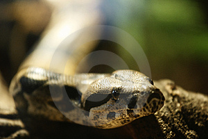 Snake Stock Photos - Image: 4203143