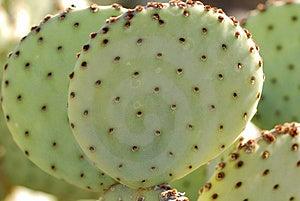 Round Cactus Stock Image - Image: 4204971