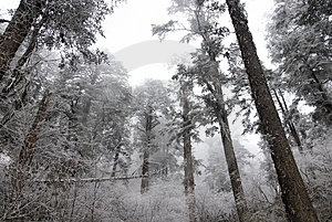 Frozen Forest Stock Photos - Image: 4207583