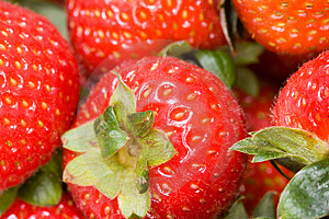 Strawberries Stock Photo - Image: 4207980
