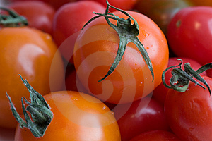 Cherry Tomatoes Royalty Free Stock Image - Image: 4215676