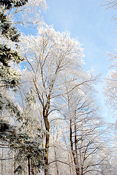 Forest At Winter Time Stock Images - Image: 4220834
