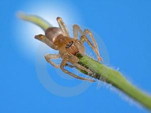Creapy Spider Stock Photo - Image: 4233030