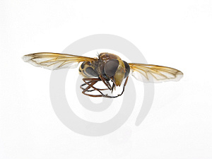 Wasp Royalty Free Stock Photos - Image: 4282578