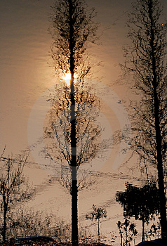 Trees Reflected In The Water Royalty Free Stock Image - Image: 4287006