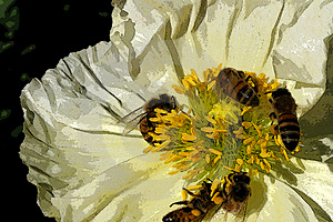 Bee Poster Stock Photography - Image: 4293512