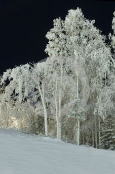 FROZEN: Trees Stock Photos - Image: 431843