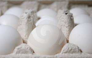 Eggs Free Stock Images