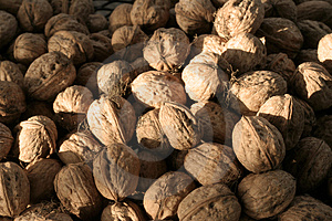 Walnuts Stock Photo - Image: 436090