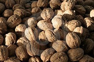 Walnuts Stock Photo - Image: 436090