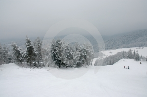 Winter Trees #3 Royalty Free Stock Photos - Image: 437518