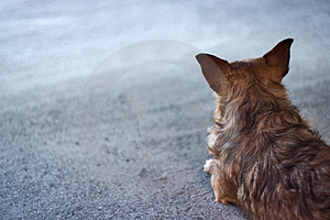 Dog Waiting Copyspace Royalty Free Stock Images - Image: 4332549