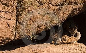Gatti Su Un Bordo Fotografia Stock - Immagine: 4337570