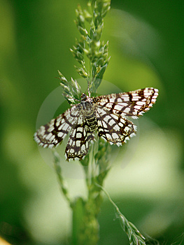 The Butterfly Sitting On A Grass. Stock Images - Image: 4342764
