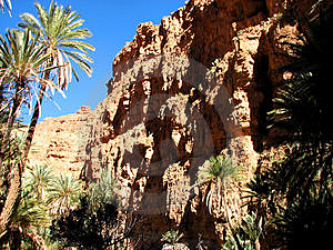 Palm Trees Of An Oasis In The Mountain In Morocco Stock Photography - Image: 4346372