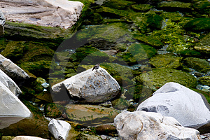 Stone,water And Bird Stock Photo - Image: 4380390