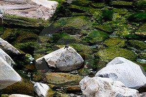 Камень, вода и птица Стоковое Фото - изображение: 4380390