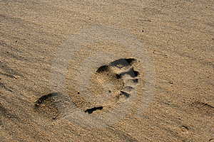 Human Footprint Royalty Free Stock Photo - Image: 4396875