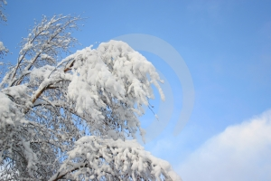 White Snow And Blue Sky Stock Images - Image: 444454