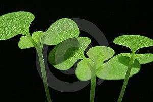 Bud Stock Photo - Image: 4403040